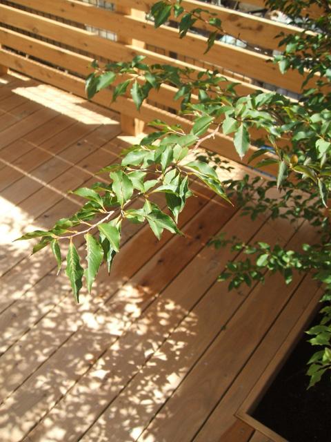 木漏れ日を楽しむ植物を植えられるよう床に穴あけ季節の変化を楽しもう