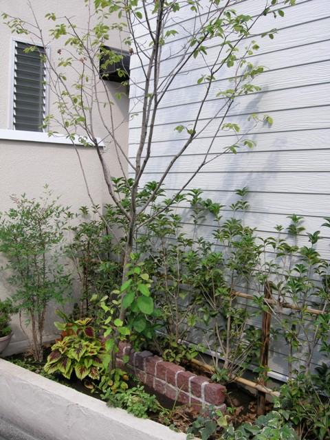 赤系のピンコロでアクセントを。ジューンベリーは人気の樹木です。